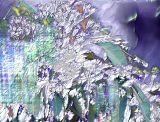 eucalypt_ice_dream_s